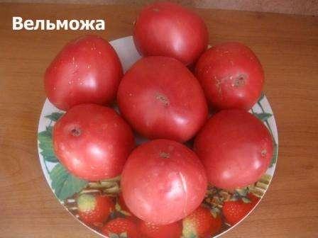 Неповторимый томат вельможа: описание сорта и отзывы