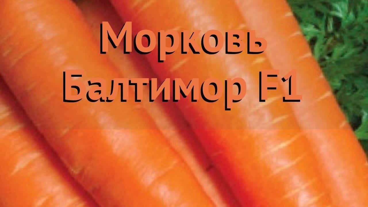 Морковь балтимор f1 описание фото отзывы