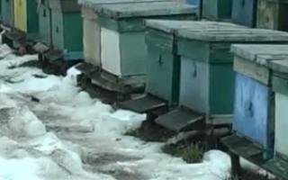 Виды, нюансы и особенности вентиляции ульев зимой