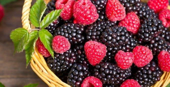 Ежевика блэк сатин black satin: описание и характеристика ягодного кустарника