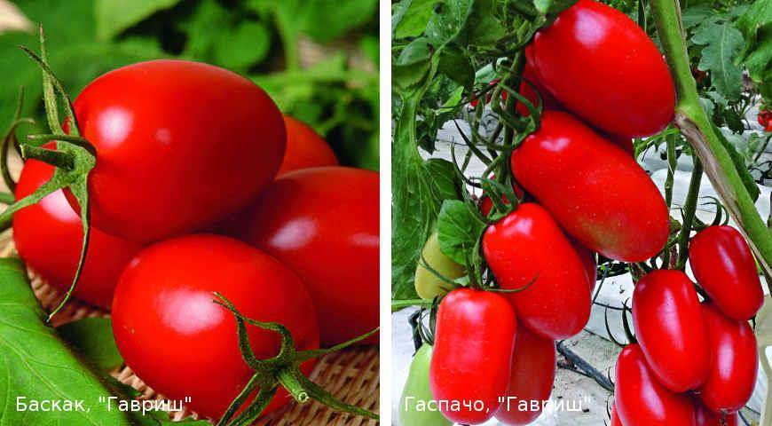 Лучшие сорта помидоров для засолки и консервирования