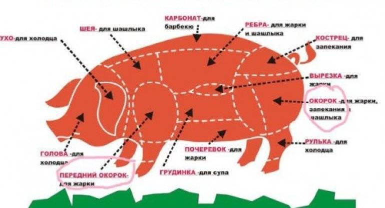 Как разделать свинью: пошаговое описание процесса, основные правила, санитарные нормы