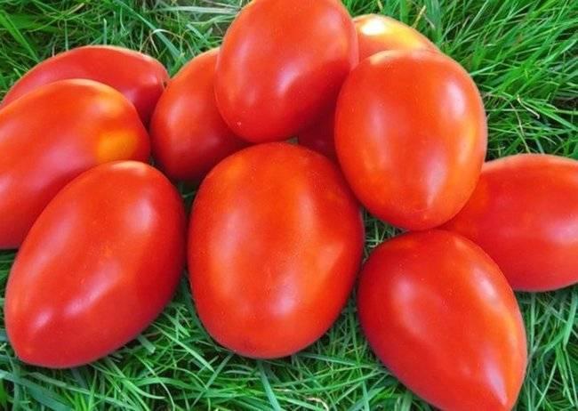 Томат земляк — описание сорта, урожайность, фото и отзывы садоводов