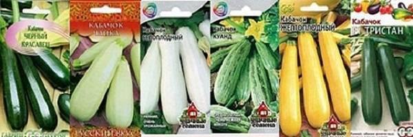 Самые урожайные сорта кабачков для средней полосы, сибири и урала