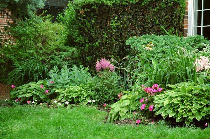 Многолетние цветы для дачи, цветущие все лето (40 фото): низкие и высокие красивые садовые цветы, цветущие с весны до осени