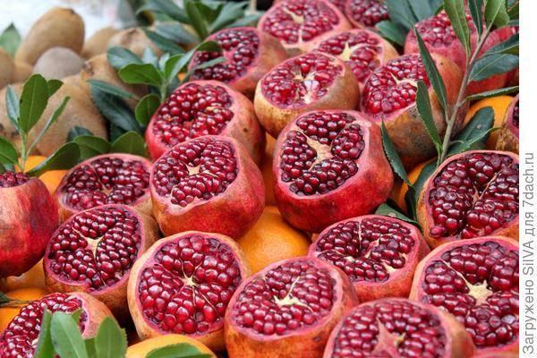 Крымские фрукты по месяцам: когда что созревает