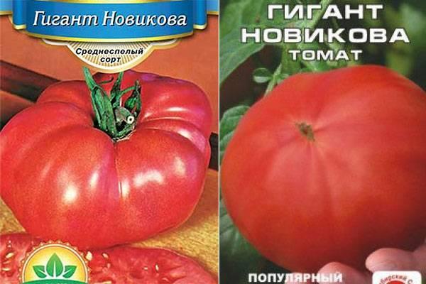 Томат ильди: фото, характеристика и описание сорта, отзывы, урожайность