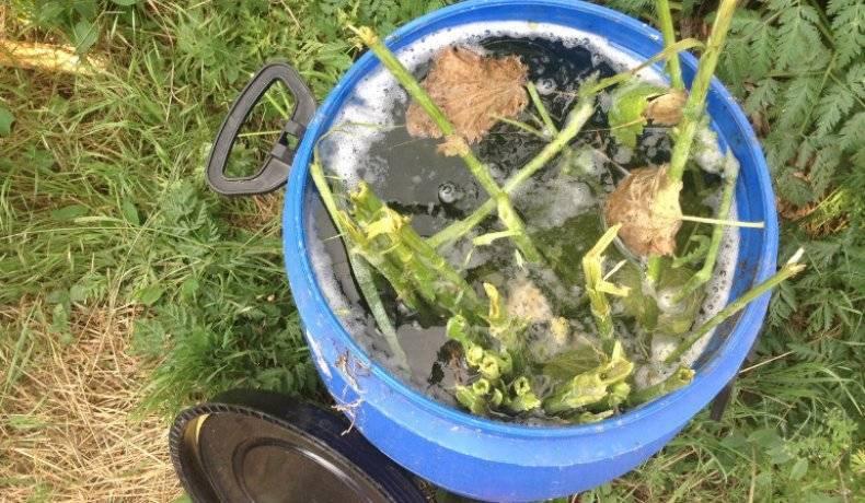 Удобрение из травы — рецепты травяных настоев для подкормки
