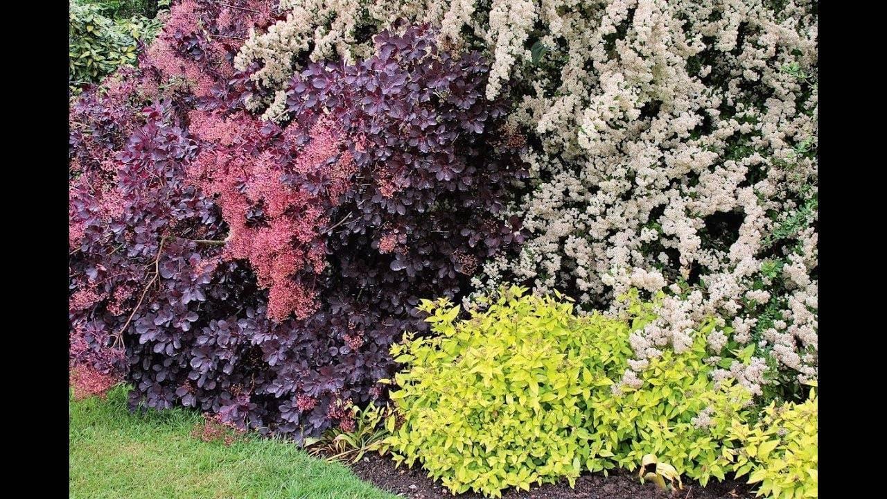 Растения для сада: декоративные, многолетние, неприхотливые, необычные и высокие