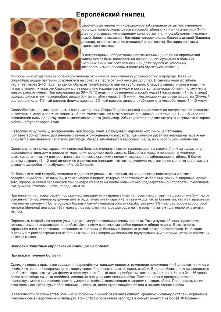 Признаки гнильца у пчел и лечение болезни