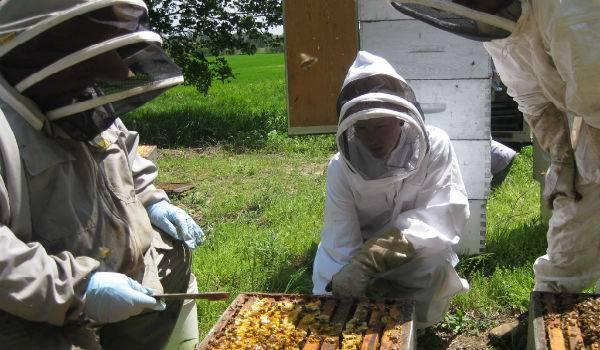 Пчеловодство как бизнес: пасека бизнес-план | idealistworld