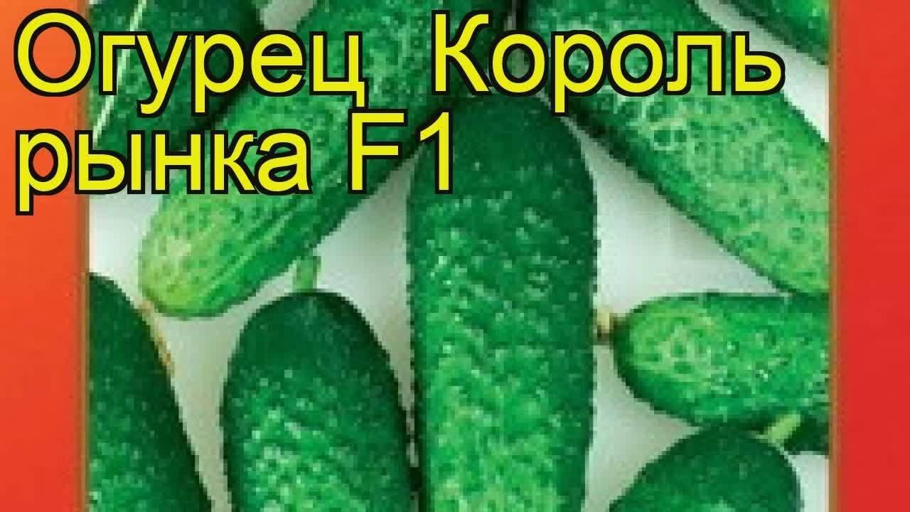 Баклажан король рынка f1: описание и характеристики сорта