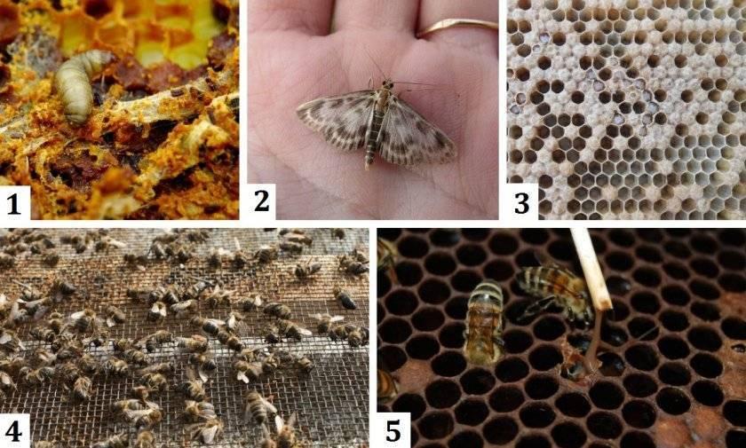 Обработка пчел муравьиной кислотой осенью