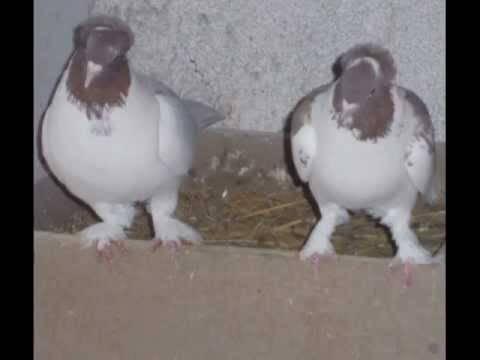 Энциклопедия владельца птицы
