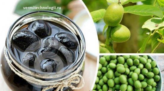 Варенье из зеленых грецких орехов: польза, рецепт - рецепты