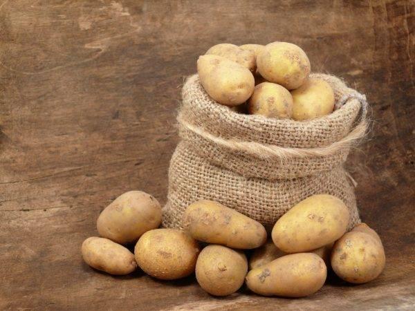 Картофель анна — описание сорта, фото, отзывы, посадка и уход