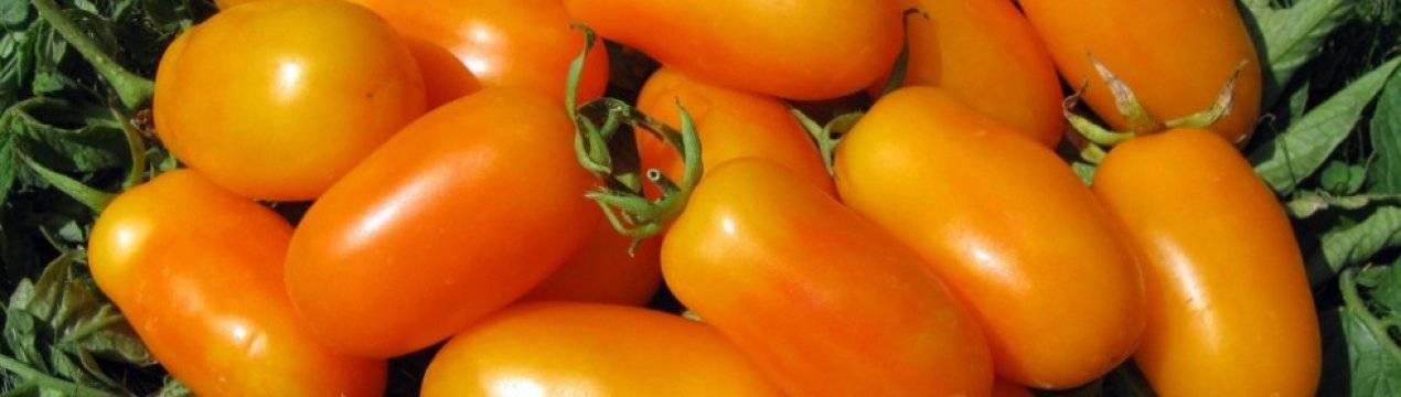 Характеристика и описание сорта томата царь колокол