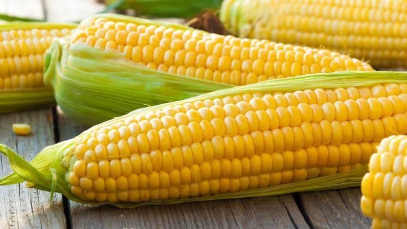 Кукуруза: польза и вред, полезные свойства и противопоказания