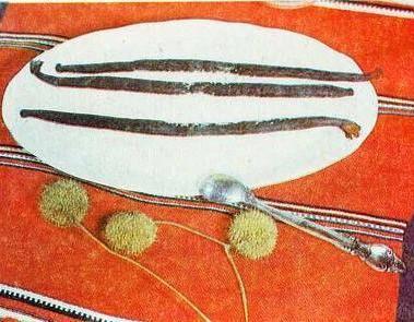 Шандра реснитчатая