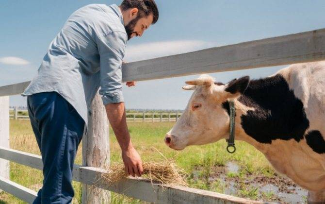 Жирность домашнего козьего молока