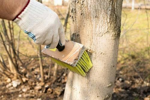 Как правильно укрыть и утеплить персик на зиму