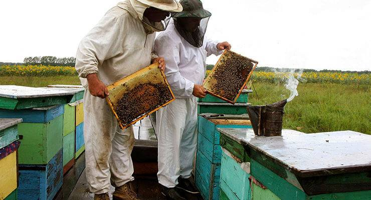 Осенняя ревизия пчелосемей, цель и задачи.