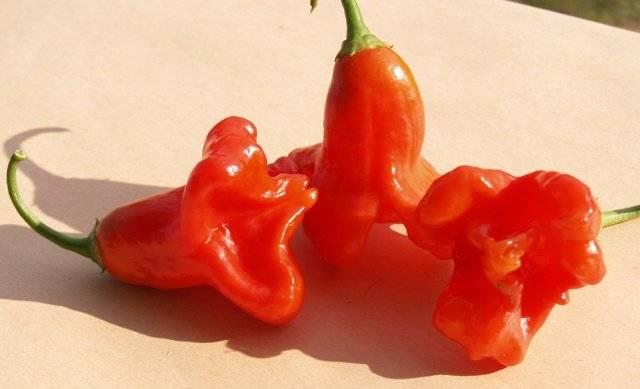 Сорта красных перцев