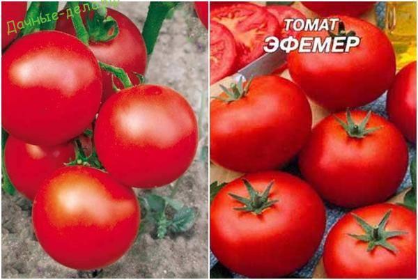 Урожайный француз с яркими и сочными плодами — томат супер марманде: описание сорта