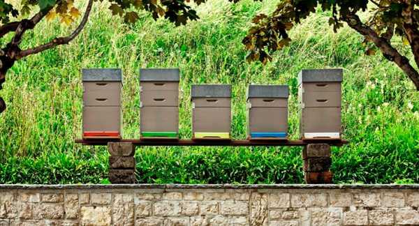 Содержание пчел. уход за пчелами зимой и летом