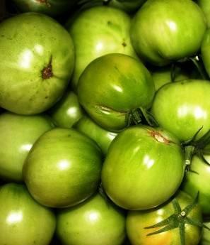 Удобрения при посадке помидор: особенности внесения и 7 народных средств