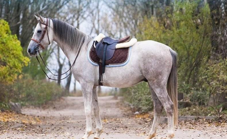 Терская лошадь — википедия. что такое терская лошадь