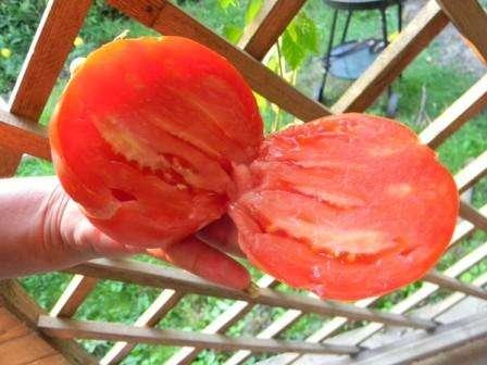 Сорт томата японский трюфель розовый — удачный выбор помидора для посадки