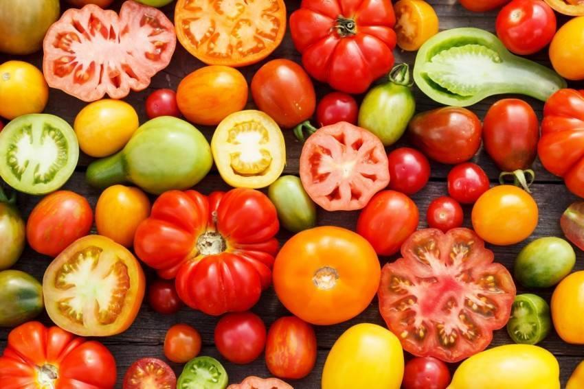 Высокорослые томаты для теплиц: высокоурожайные