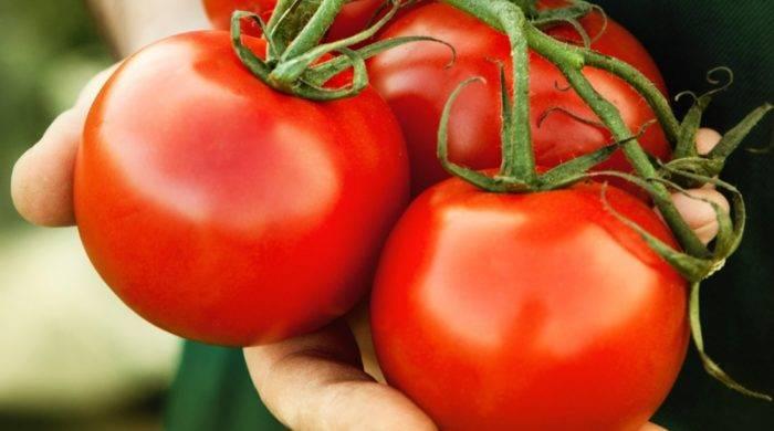 Для теплицы и открытых грядок выбирайте томат «настенька»: характеристика и описание сорта
