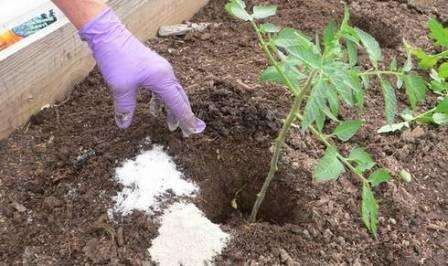 Удобрения при посадке томатов - какие вносить подкормки для помидор