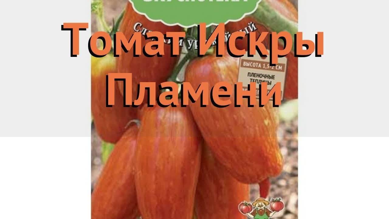 Искры пламени томат описание сорта