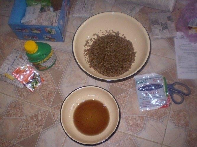 Обработка семян помидоров перед посадкой на рассаду – пошаговая инструкция