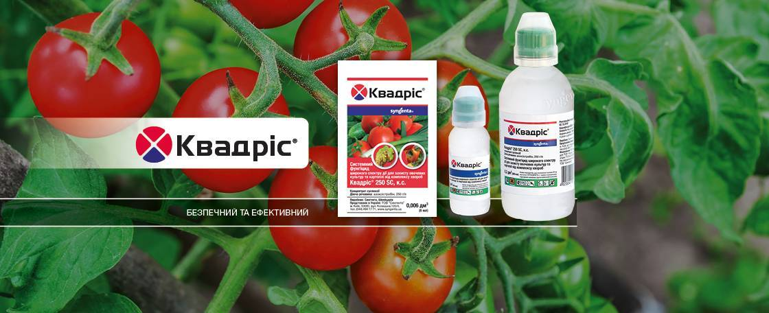 Применение высокоэффективного препарата для защиты растений — квадрис