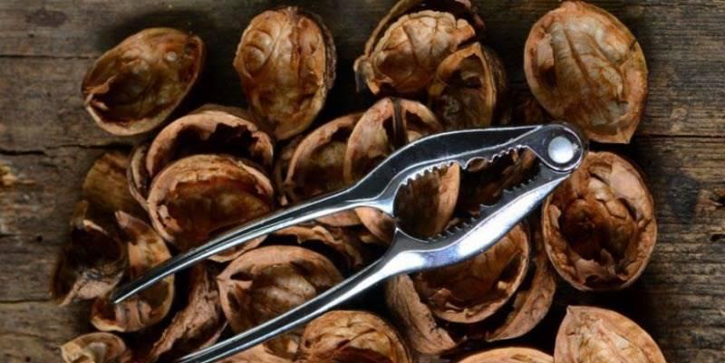 Применение настойки и отвара из листьев грецкого ореха