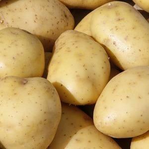 Сорт картофеля вега: характеристика и описание сорта