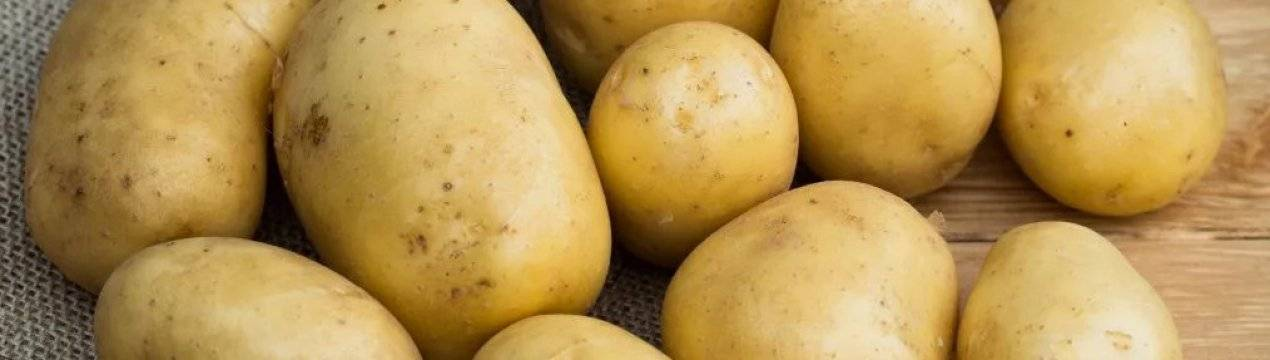 Сорт картофеля «ажур» – описание и фото