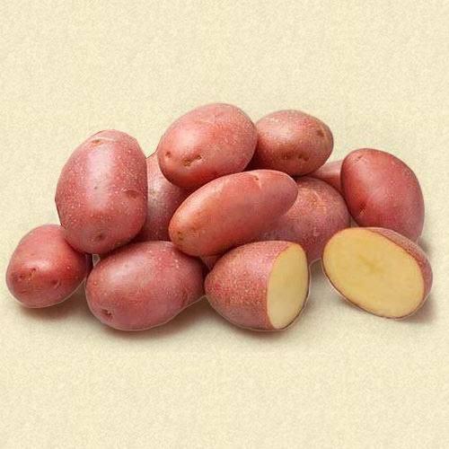 """Картофель """"колобок"""": описание сорта, фото, характеристики и особенности выращивания"""