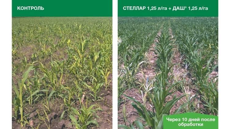 Применение гербицидов при выращивании кукурузы