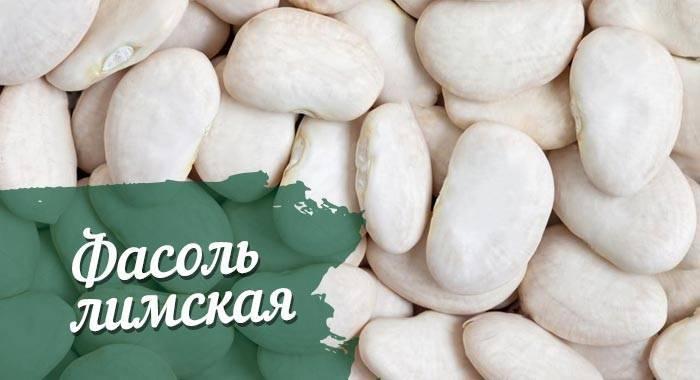 Лимская фасоль - моя дача - информационный сайт для дачников, садоводов и огородников