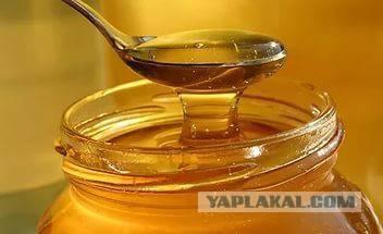 Можно ли кормить пчел подсолнечным медом в период зимовки