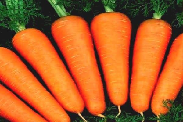 Морковь абако описание сорта