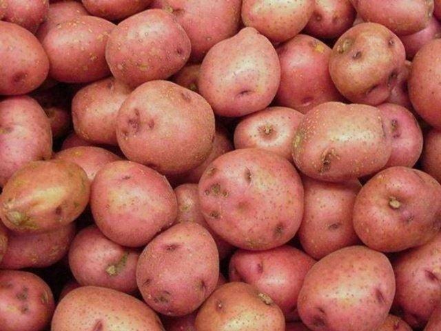 Картофель розалинд — описание сорта, фото, отзывы, посадка и уход