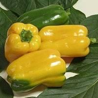 Перец какаду высокопродуктивный сладкий сорт