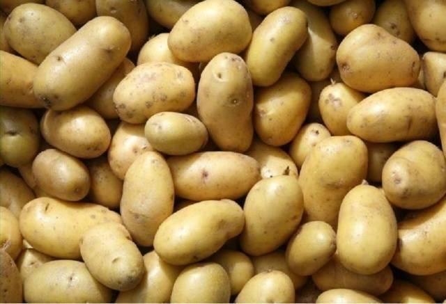 Среднеранний сорт картофеля «лилли» с высокой урожайностью