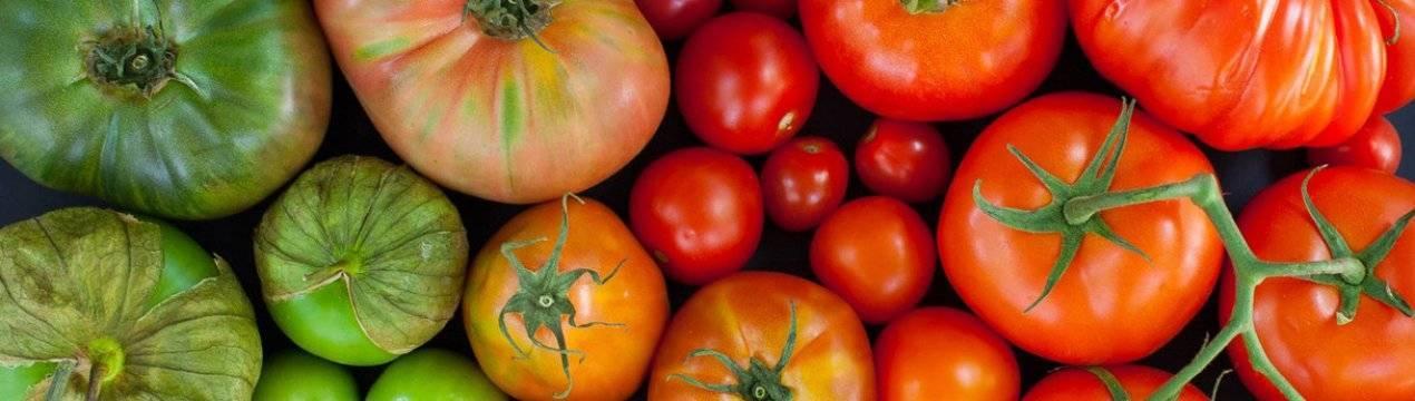 Детерминантные помидоры: чем хороши и как их выращивать